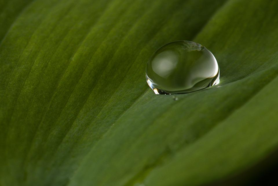 Drop Of Water, Leaf, Rain, Nature, Close Up, Green