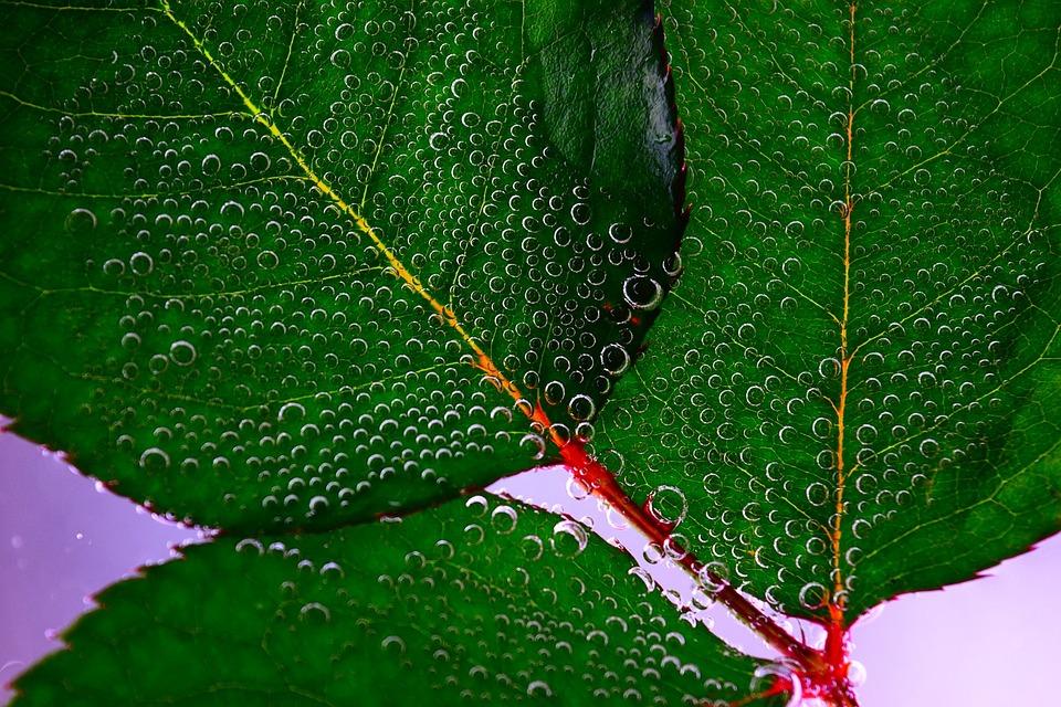 Leaf, Drop Of Water, Green, Macro
