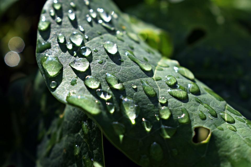 Leaf, Droplets, Rain, Dew, Wet, Nature, Water, Plant