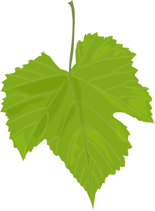 Autumn, Fall, Grape, Green, Leaf, Season, Wine
