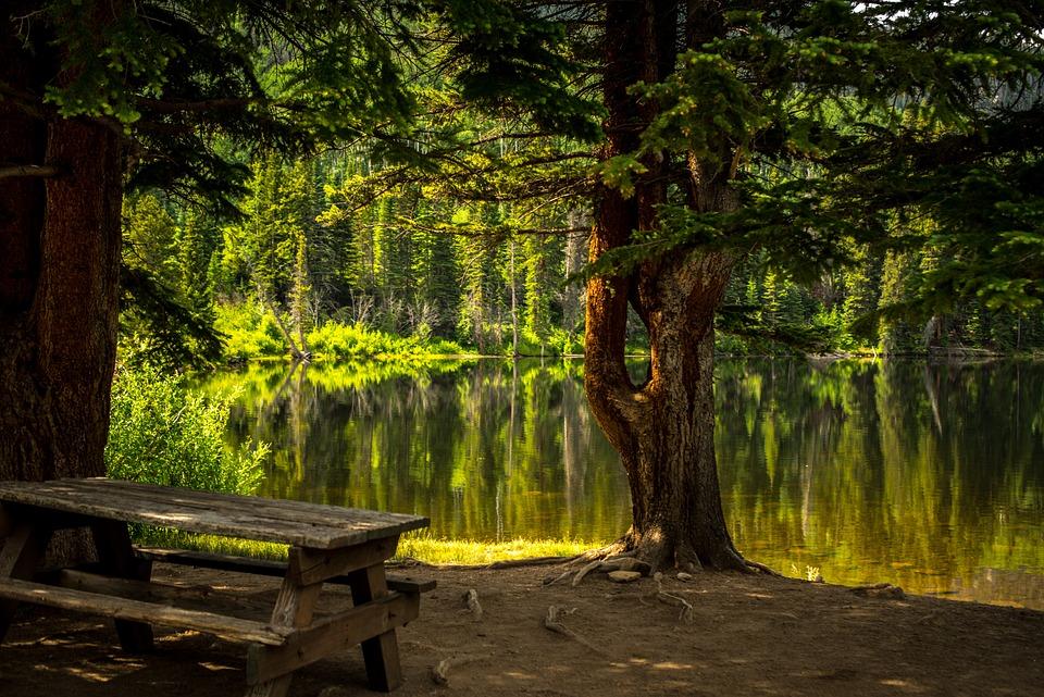 Bench, Dawn, Fall, Grass, Lake, Landscape, Leaf, Light