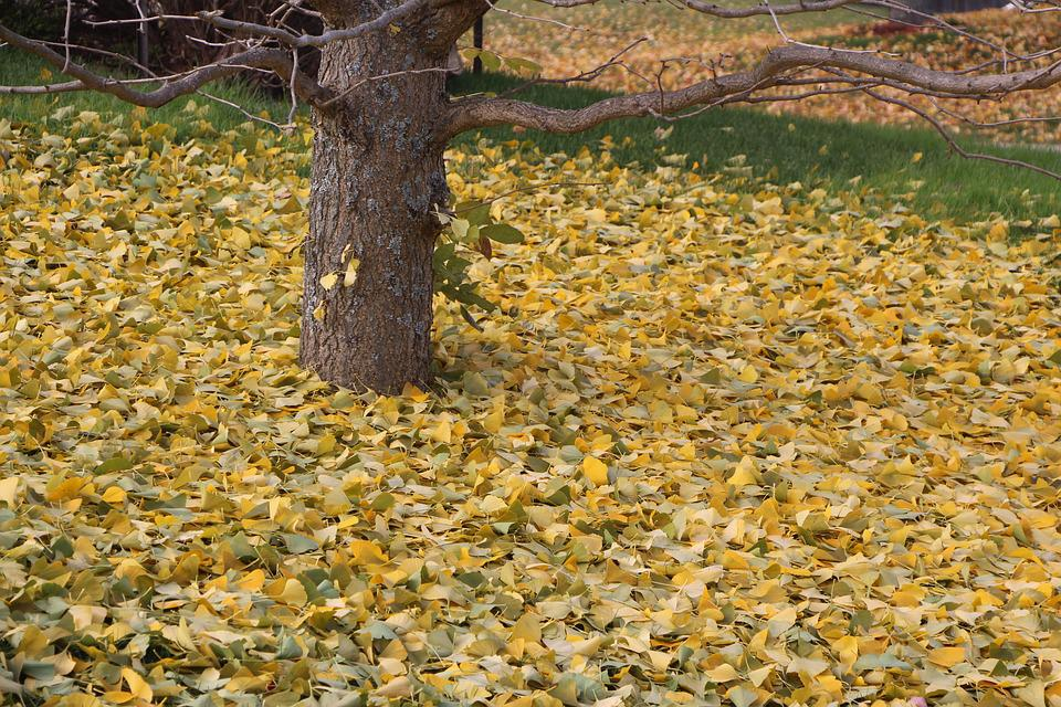 Nature, Fall, Leaf, Tree, Season, Leaves, Autumn, Plant