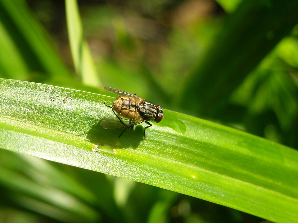Flies, Insects, Leaf, Pandan, Green