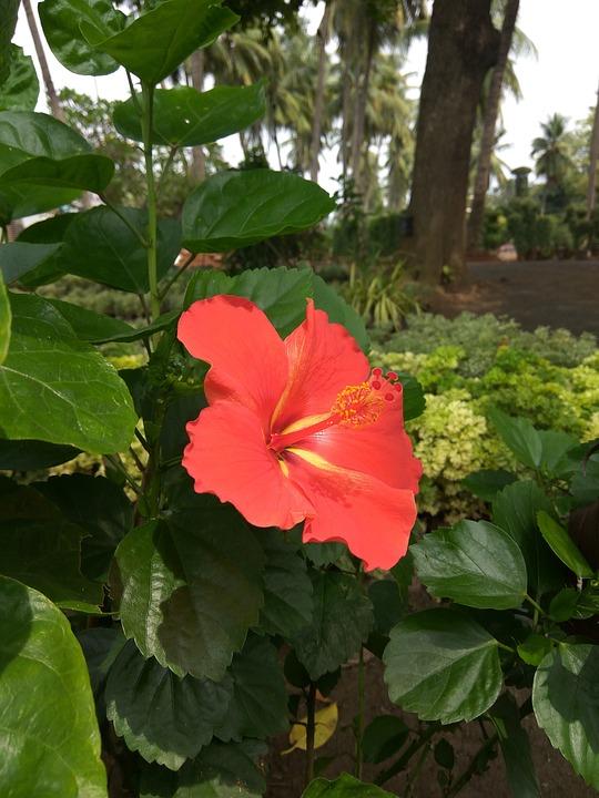 Flower, Flora, Nature, Leaf, Garden