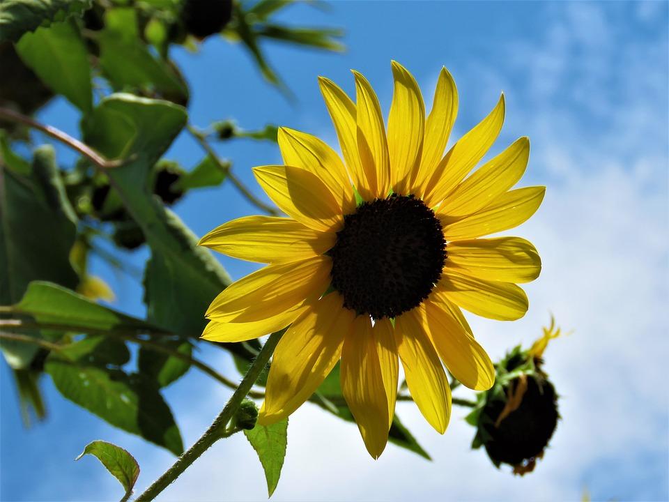Nature, Flora, Summer, Flower, Leaf, Outdoors, Growth