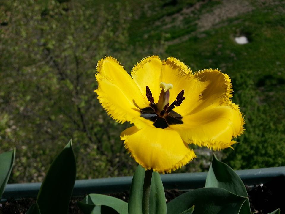 Flower, Nature, Flora, Garden, Leaf