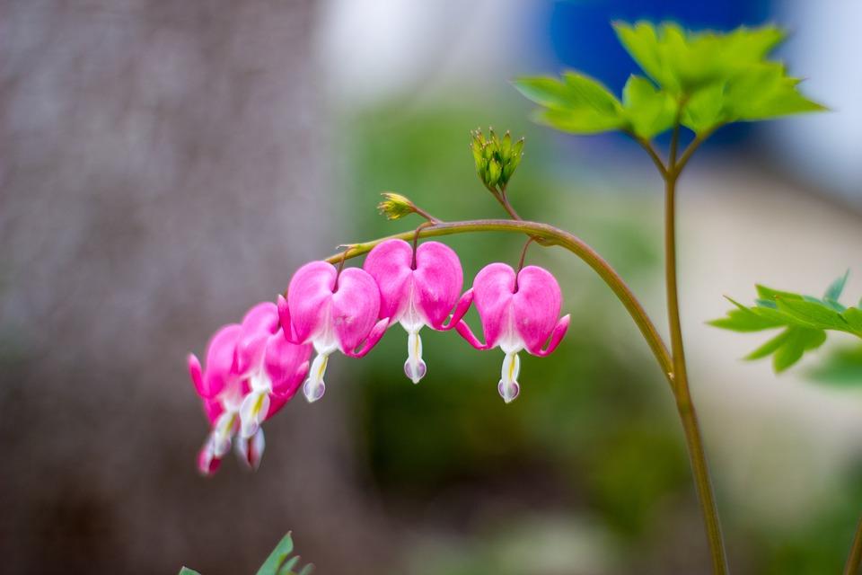 Nature, Flower, Flora, Outdoors, Leaf, Petal, Blooming