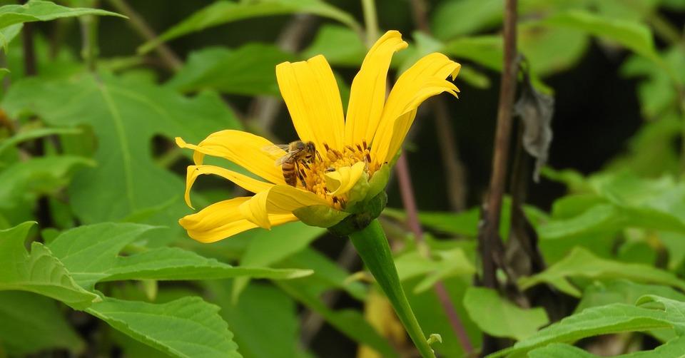 Nature, Summer, Plant, Leaf, Flower