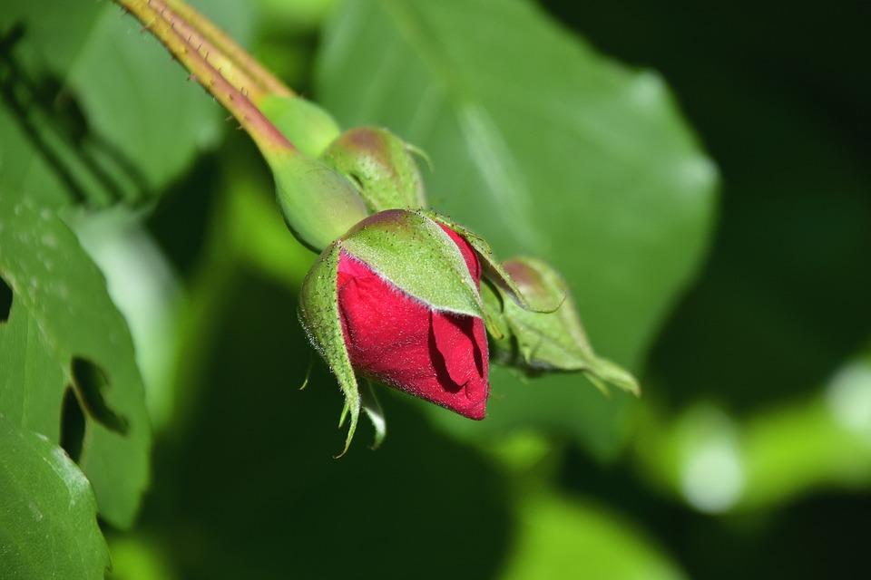 Leaf, Nature, Flower, Plant