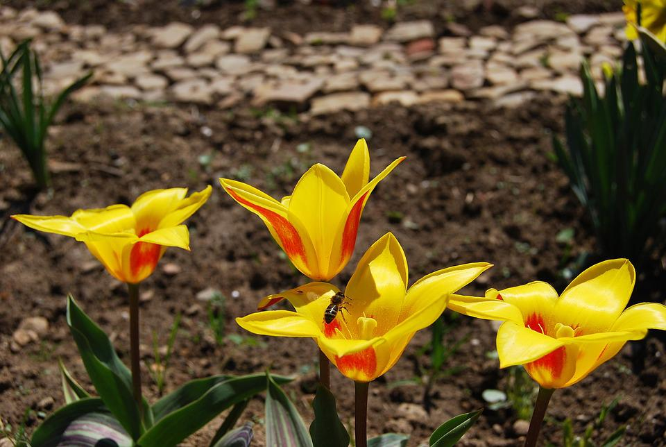 Free photo Leaf Flower Plant No One Early Spring Nature