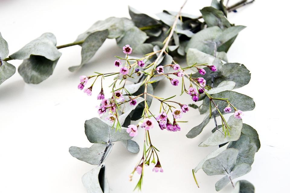 Eucalyptus, Flowers, Floral, Leaf, Greenery, Spa