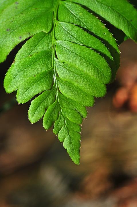 Fern, Leaf, Mountains, Green, Forest, Foliage