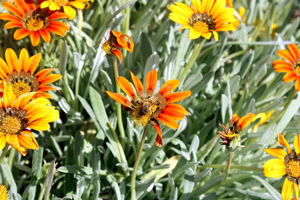 Flowers, Yellow Flower, Foliage, Leaf, Petals, Floral