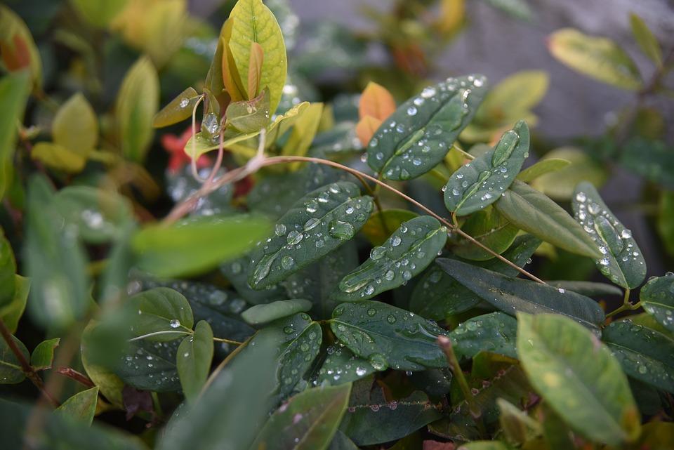 Quisqueya, Leaves, Leaf, Tree, Plant, Foliage, Forest