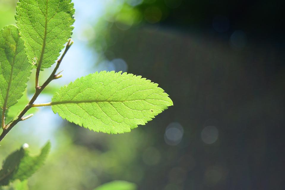 Leaves, Light, Green, Shadow, Leaf, Sun, Forest