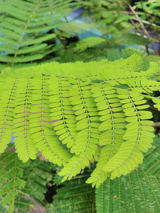 Fresh, Green, Leaves, Spring, Leaf, Nature, Pattern
