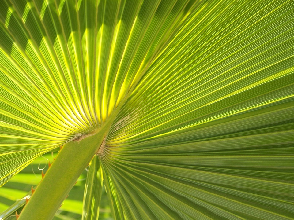 Palm Frond, Leaf, Palm, Summer, Frond, Nature, Tropical