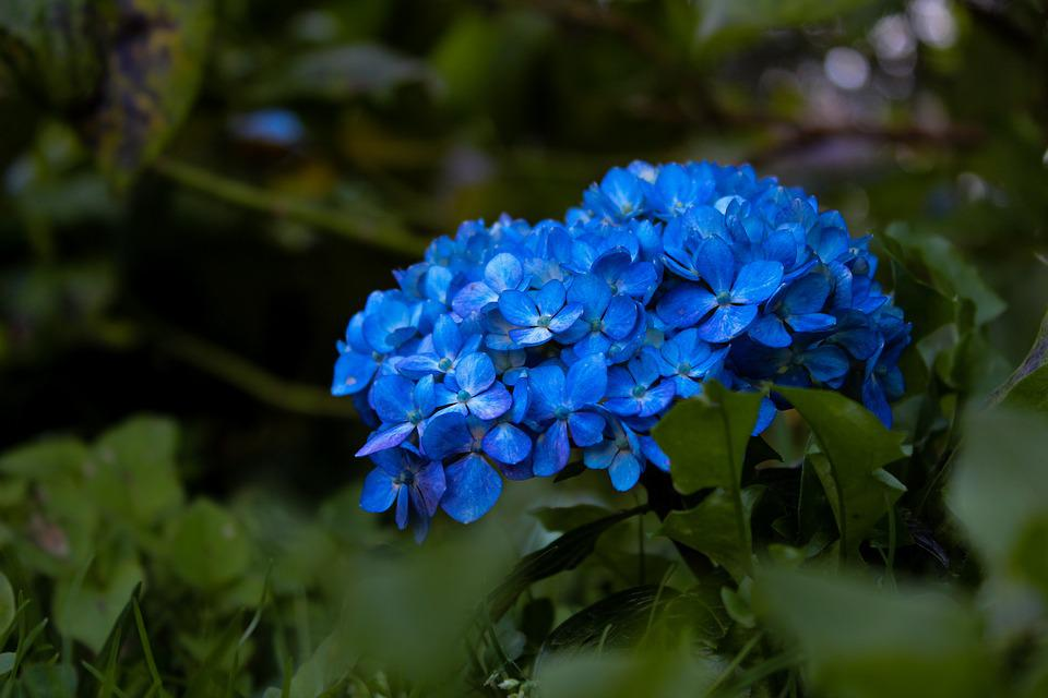 Nature, Plant, Flower, Garden, Leaf, Outdoors