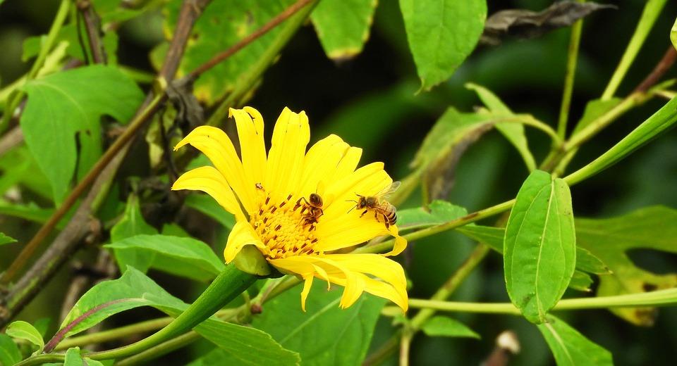 Nature, Plant, Summer, Leaf, Garden