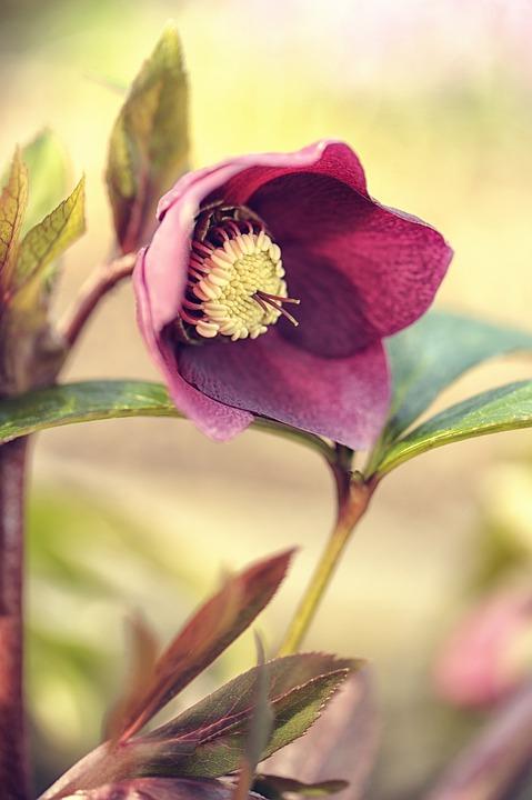 Flower, Nature, Plant, Leaf, Garden, Blossom, Bloom