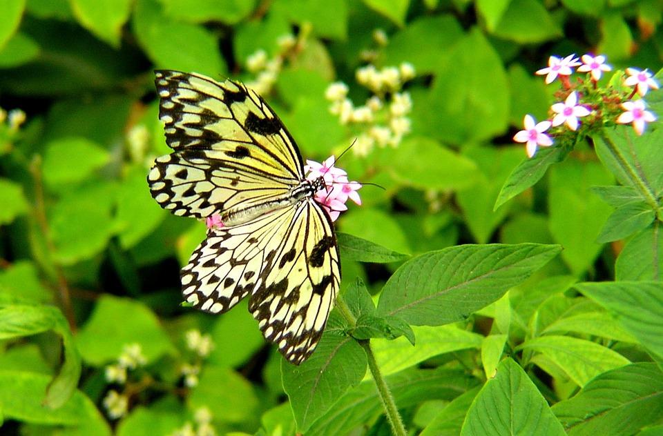 Butterfly, Garden, Flowers, Wings, Leaf, Leaves, Plants