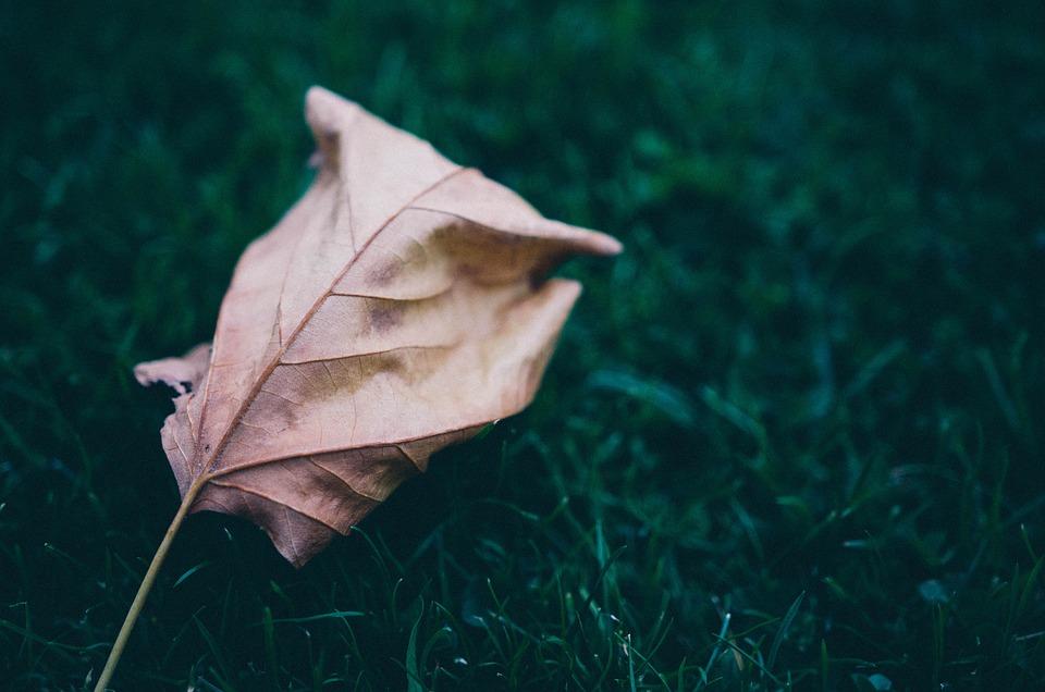 Grass, Leaf, Leaves