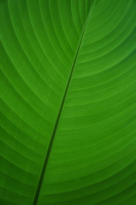 Leaf, Green, Banana, Banana Leaf, Palm, Plant, Flora
