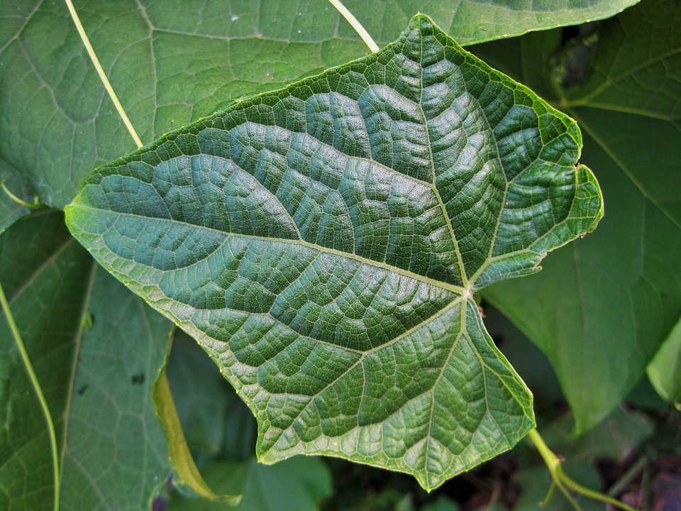 Leaf, Green, Veins, Patterned, Fine, Detail