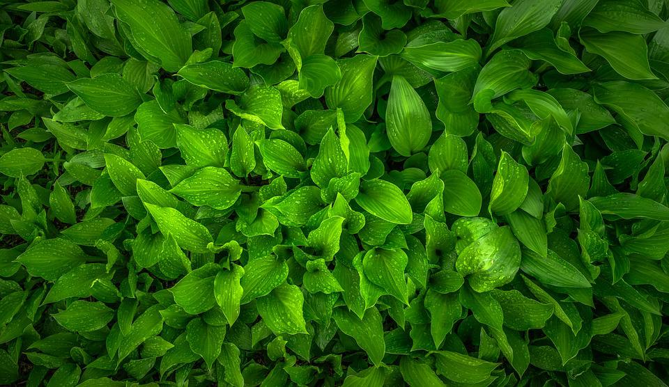 Leaf, Nature, Green, Spring, Hwalyeob, Abstract, Plants