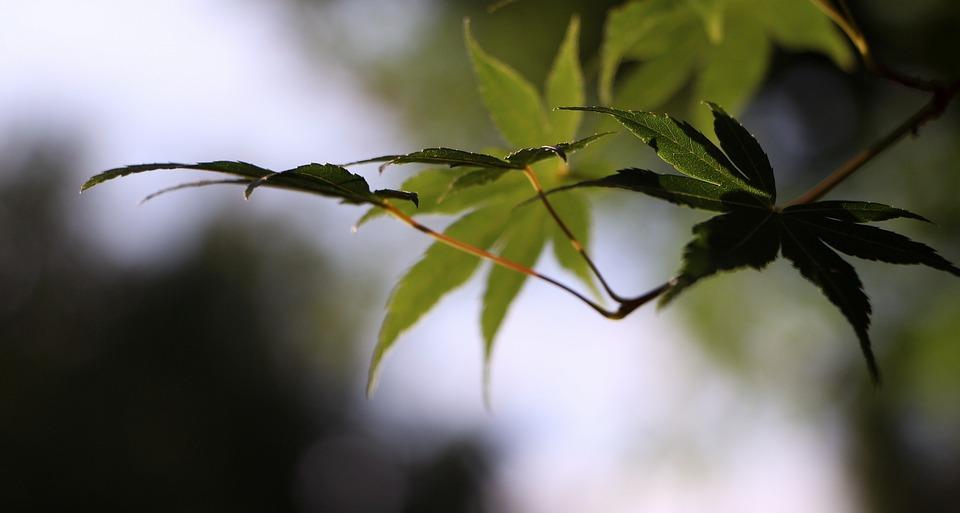 Leaf, Branch, Nature, Landscape, Green, Eventide