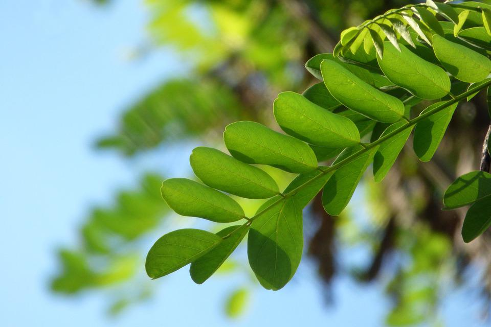 Leaf, Green Leaf, Tree, Nature, Green, Plant