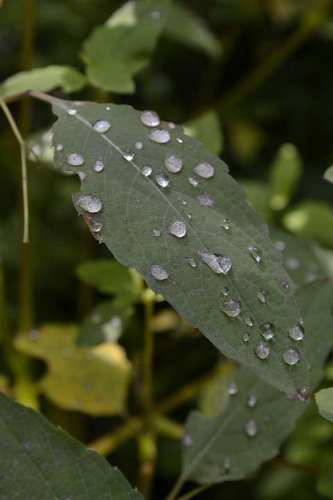 Leaf, Plant, Nature, Pearl, Rain, Dew, Growth, Garden