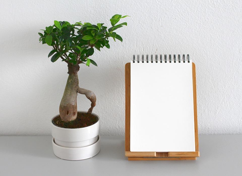 Leaf, Plant, Growth, Nature, Pot, Houseplant, Root