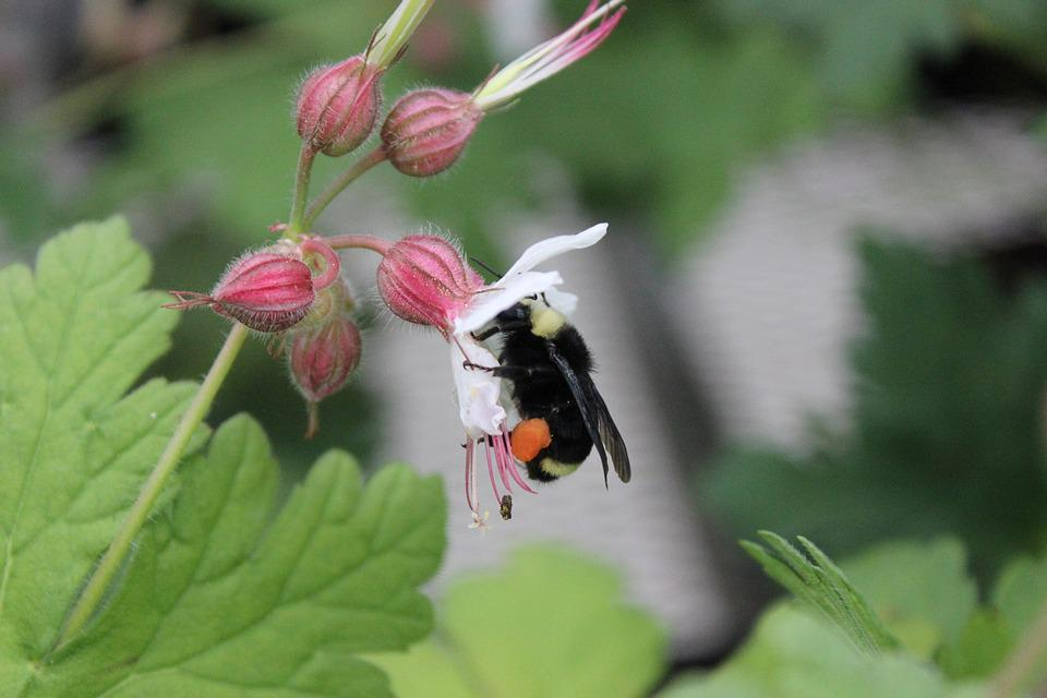 Nature, Outdoors, Flora, Insect, Leaf, Bumble Bee