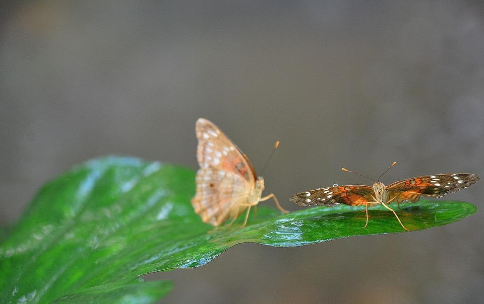 Butterfly, Insect, Leaf, Nature, Natural, Plant, Green