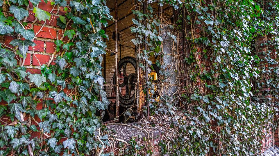 Ivy, Leaf, Wall, Factory, Old, Leave