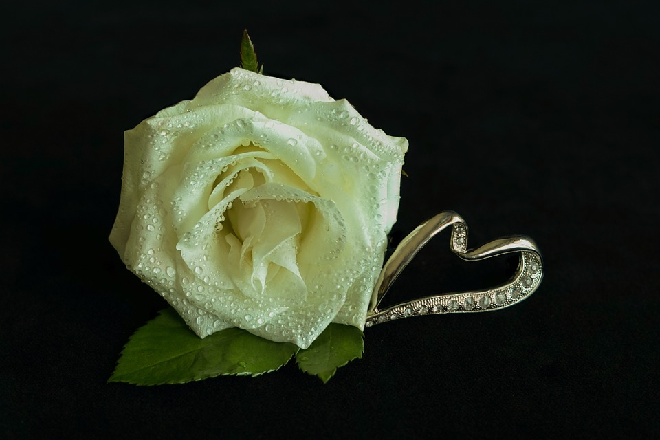 White Rose, Heart, Jewellery, Noble, Drip, Flower, Leaf