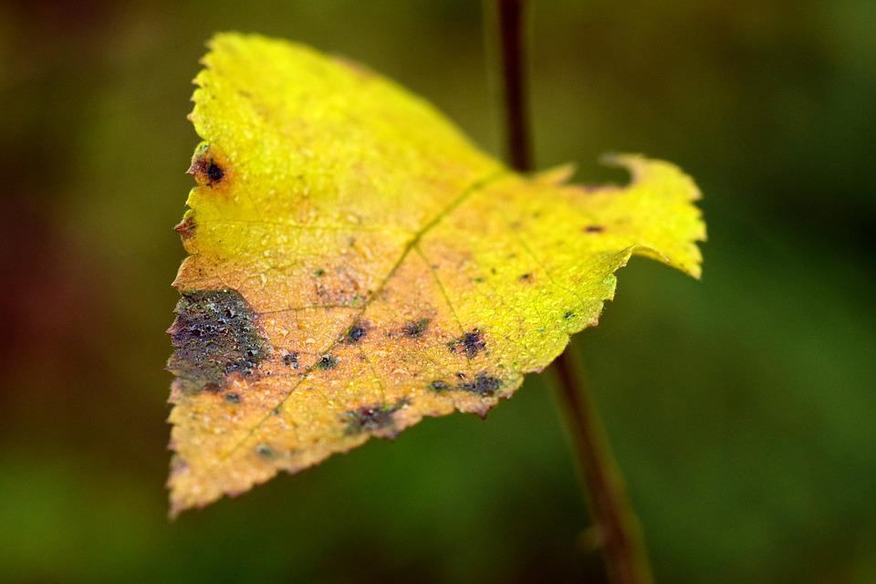 Leaf, Leaves, Autumn, Fall Foliage, Colorful Leaves