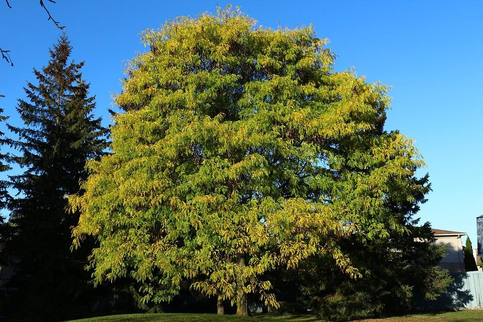 Tree, Fall, Nature, Trees, Leaves, Leaf, Wood, Green