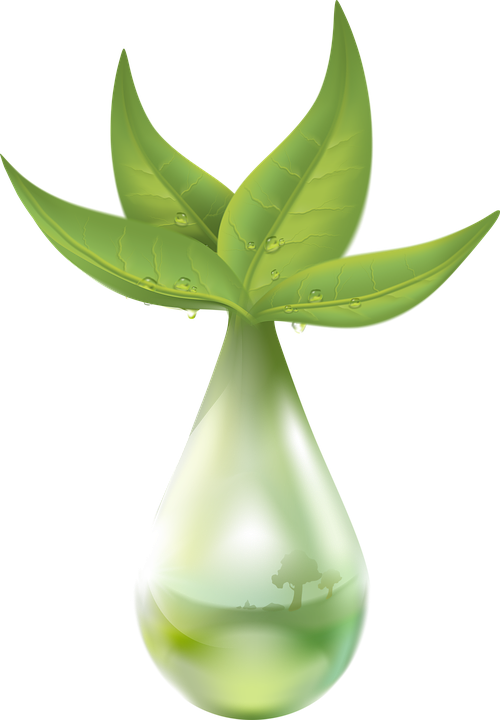 Extraction, Plant, Liquid, Drop Of Water, Leaf, Green