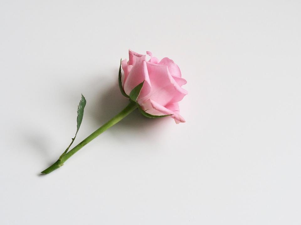 Flower, Nature, Love, Leaf, Flora