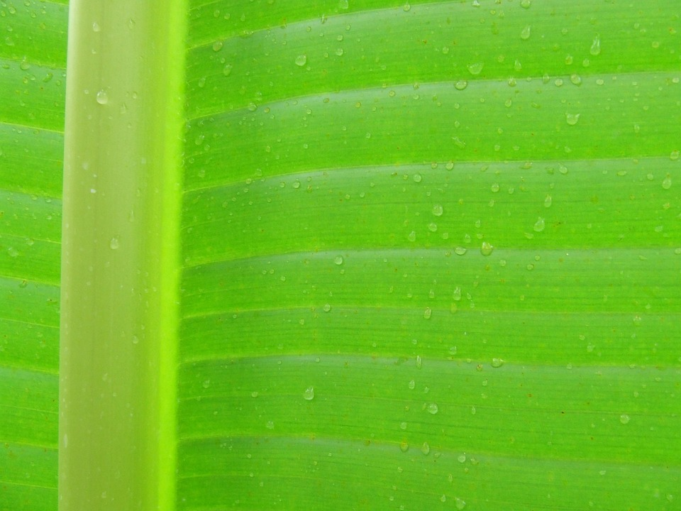 Leaf, Background, Texture, Macro, Drops Plant Leaves