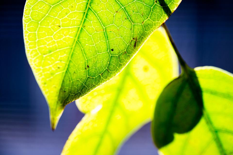 Nature, Sun, Leaf, Leaves, Green, Macro, Close-up