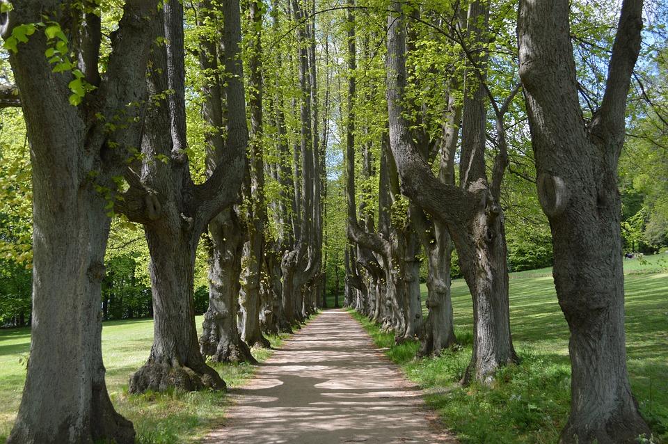 Landscape, Natural, Leaf, Park, Trees, All, Path
