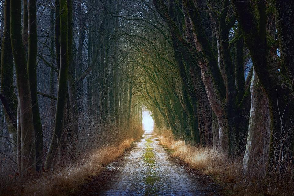Tree, Nature, Wood, Light, Leaf, Away, Road, Path