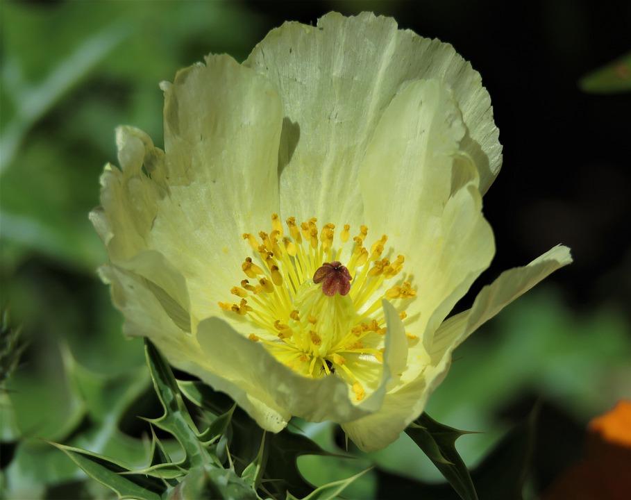 Flower, Flora, Nature, Leaf, Summer