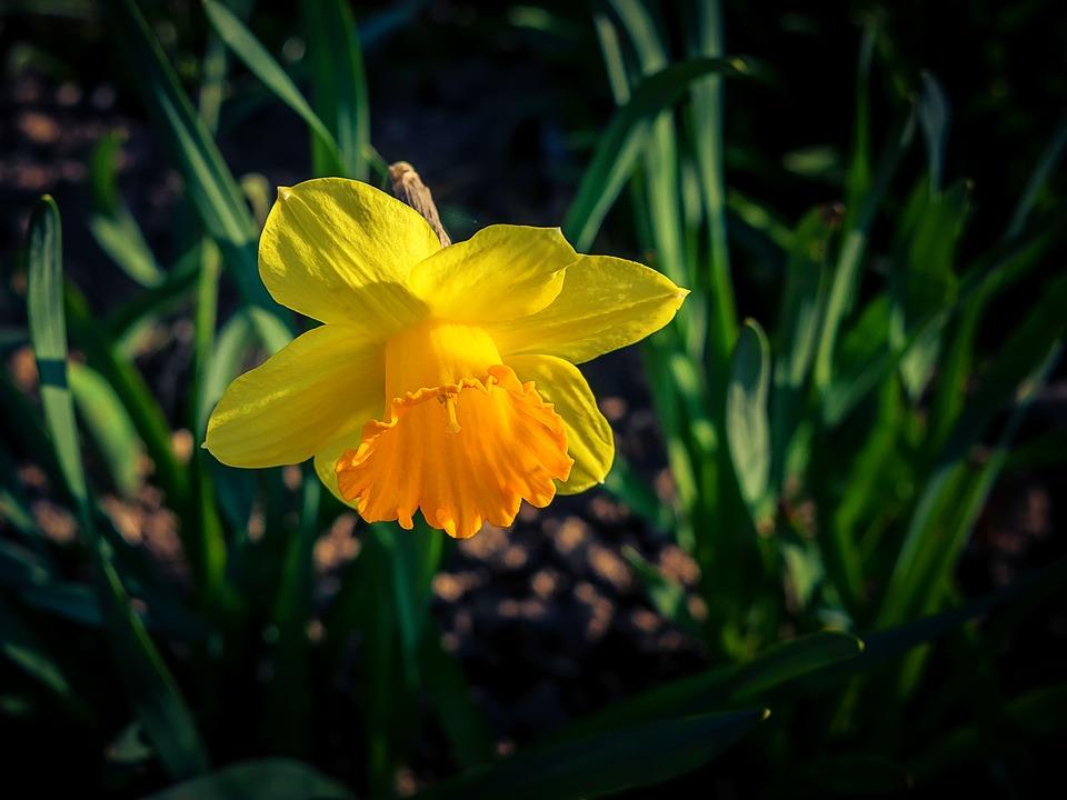 Flower, Plant, Nature, Petal, Garden, Flowers, Leaf