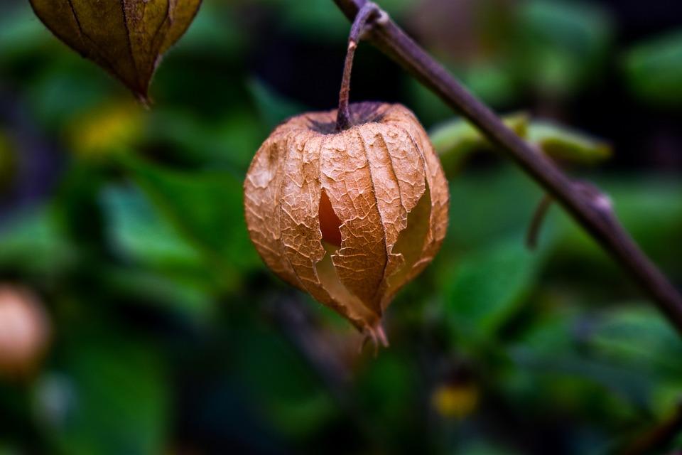 Fruit, Leaf, Nature, Food
