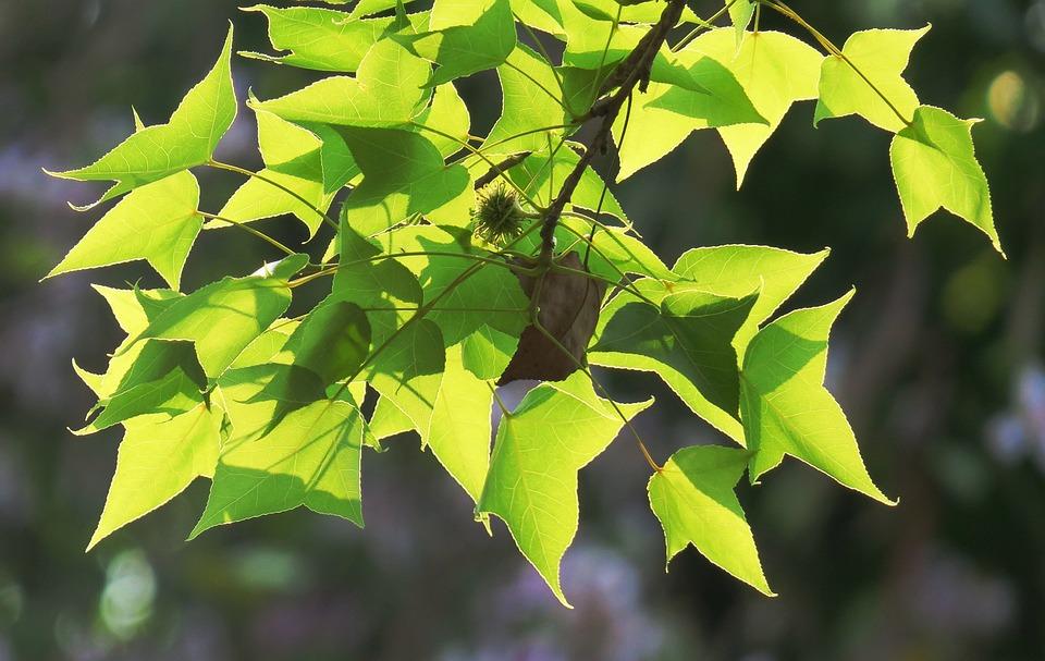 Leaf, Nature, Plant, Kinds Of Food, Light, Lush