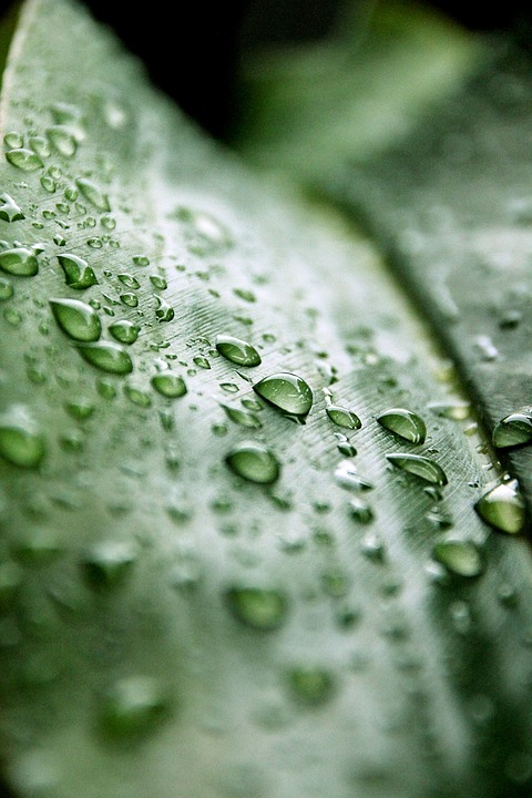 Drip, Leaf, Rain, Nature, Green, Drop Of Water, Macro